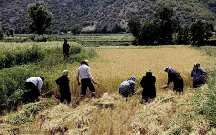 بیمه روستایی ، کشاورزی و عشایر